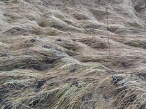 Dry gray grass on the field in autumn in the afternoon stock photo