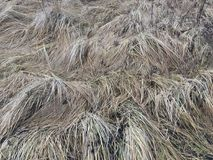 Dry gray grass on the field in autumn in the afternoon royalty free stock image
