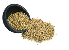 Dry Green Buckwheat Grain Background Stock Images