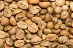 Dry green coffee beans (Coffea arabica) Stock Photos