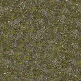 Dry and Green Grass on the Ground with Moss. Royalty Free Stock Images