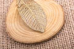 Dry green leaf on a a piece of wood Royalty Free Stock Photos