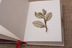 Dry green leaves on lined paper. Dry green leaves placed  on lined paper Stock Photo