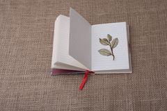 Dry green leaves on lined paper. Dry green leaves placed  on lined paper Royalty Free Stock Photos