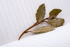 Dry green leaves on lined paper. Dry green leaves placed  on lined paper Royalty Free Stock Photography