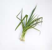 Dry green onions. Dead green onions , dry shallot plants Stock Photo
