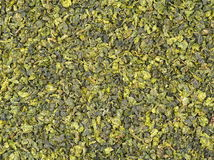 Dry green oolong tea leaves Royalty Free Stock Photography