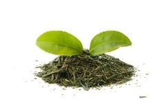 Dry green tea with a fresh tea leaf Stock Photos