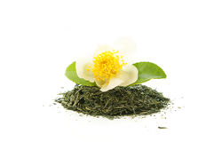 Dry green tea with a tea flower Stock Image