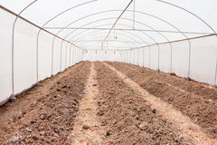 Dry greenhouse plantation. Arched greenhouse for plants seeding stock images