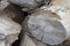 Dry grey cut wood logs closeup royalty free stock images