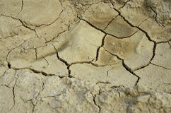 Dry Ground. In close view Royalty Free Stock Photo