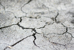 Dry ground. The ground which has cracked from a heat Stock Photography