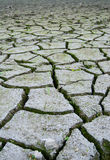 Dry ground. Dry clefted ground and several bushes of grass Stock Photos