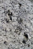 Dry ground with bare foot prints Stock Photo