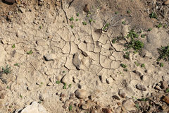 Dry ground. Can be used as background Stock Photos