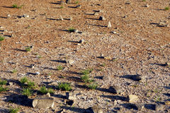 Dry ground. In Cote d'Armor in Brittany in west of France Stock Images