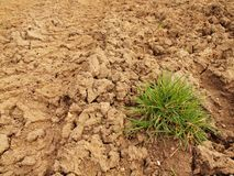 Dry ground of cracked clay with tuft of grass. Royalty Free Stock Images