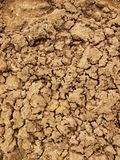Dry ground of cracked clay with tuft of grass. Stock Image
