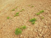 Dry ground of cracked clay with tuft of grass. Royalty Free Stock Photography