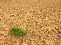 Dry ground of cracked clay with tuft of grass. Royalty Free Stock Photos