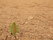 Dry ground of cracked clay with tuft of grass. Stock Photography
