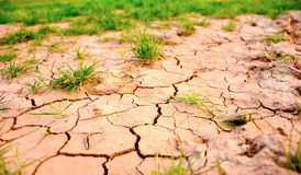 Dry ground. Dry cracked ground in the fields Royalty Free Stock Photography