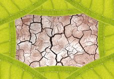 Dry ground in leaf frame Stock Photography