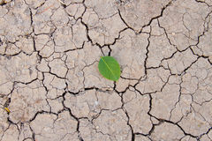 Dry ground and leaf Stock Photography