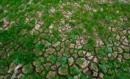 Dry ground. Save tree for Earth Day and  Arbor Day Stock Images