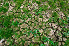 Dry ground. Save tree for Earth Day and  Arbor Day Stock Photos