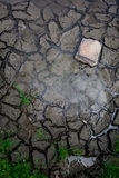 Dry ground. Save tree for Earth Day and  Arbor Day Royalty Free Stock Images