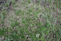 Dry ground. Save tree for Earth Day and  Arbor Day Royalty Free Stock Photos