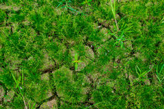Dry ground. Save tree for Earth Day and  Arbor Day Stock Photography