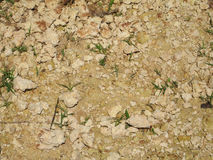 Dry ground with small green plant Stock Photo