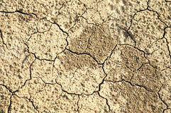 Dry ground texture. Dry ground with cracks, texture, background Royalty Free Stock Photography