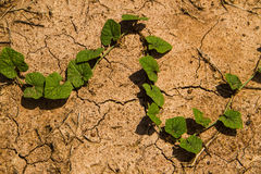 Dry ground texture with green plant. Stock Image