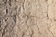 Dry ground texture top view Royalty Free Stock Images
