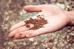 Dry ground on a woman hand Royalty Free Stock Photo