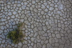 Dry ground with young plant Royalty Free Stock Image
