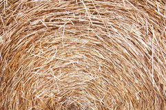 Dry hay Royalty Free Stock Photo