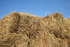 Dry hay against clear cloudless blue sky closeup Stock Photography