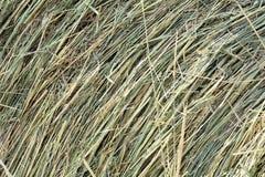 Dry hay Stock Photo