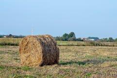 Dry hay Stock Photos