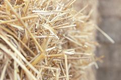 Dry hay close up Royalty Free Stock Image