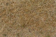 Dry hay closeup image Stock Photo