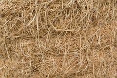 Dry hay closeup Stock Photography