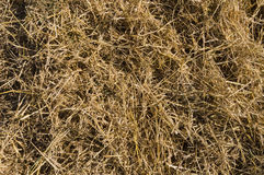 Dry hay closeup, natural straw Royalty Free Stock Photo