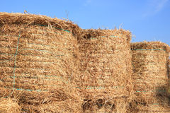 Dry hay in cow farm Stock Image
