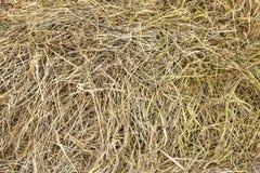 Dry hay Stock Image